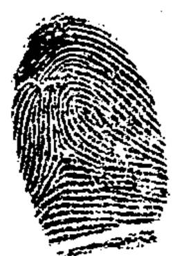 ... on the frequency of fingerprint patterns. In that study 17951192 iniduals were included from the male population. The tented arch pattern appeared ...  sc 1 st  Fingerprint Geometric Analysis & image004.jpg