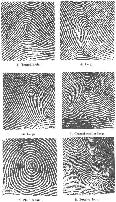 Three+basic+fingerprint+patterns
